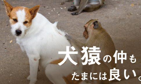 Dp1SUkuWkAIXRFS 486x290 - 犬猿の仲もたまには良い。