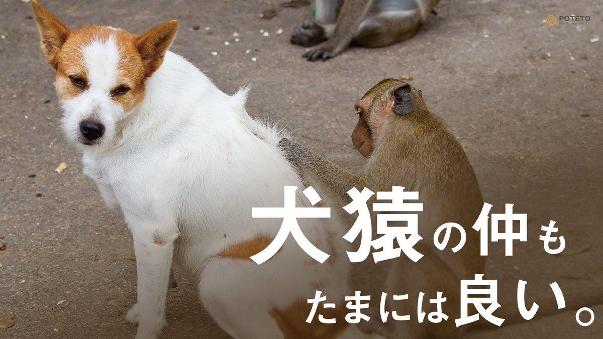 Dp1SUkuWkAIXRFS - 犬猿の仲もたまには良い。